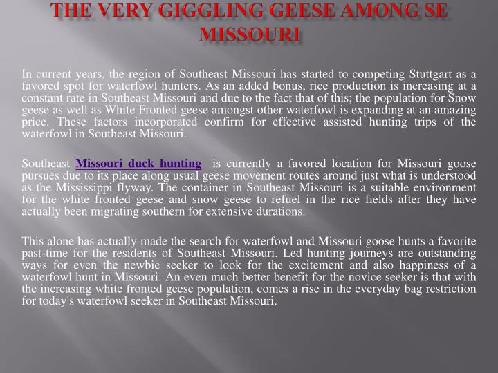 The very giggling geese among se missouri