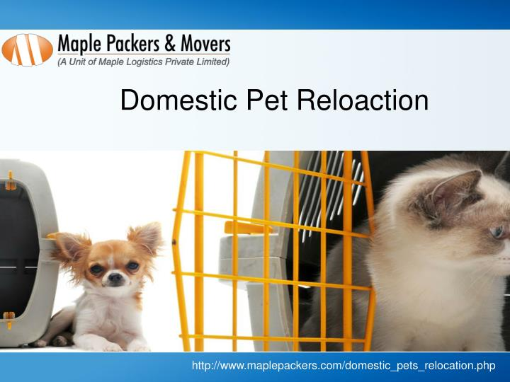 Domestic Pet Reloaction