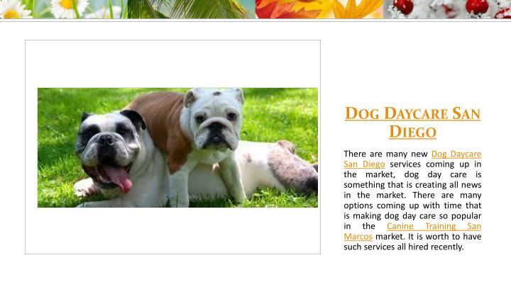 Dog Daycare San Diego