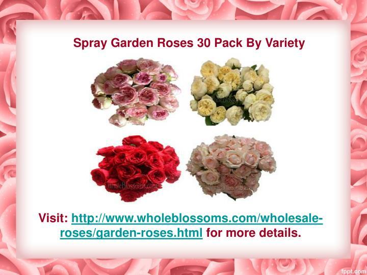 Spray Garden Roses 30 Pack By Variety