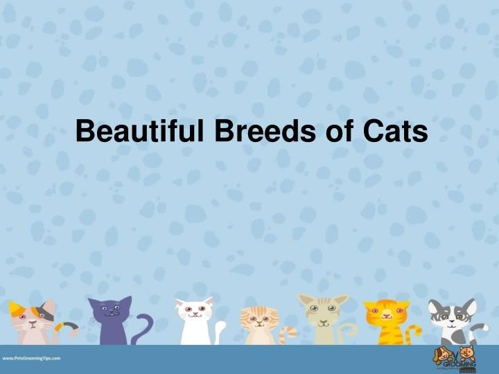 Beautiful breeds of cats