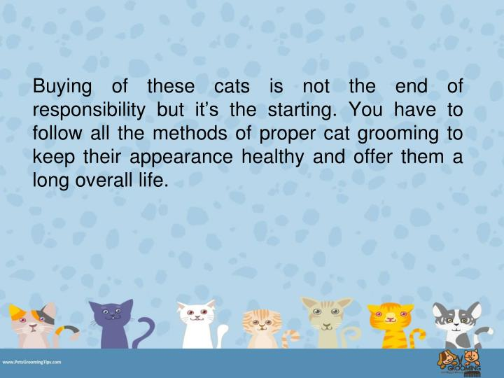 Buying of these cats is not the end of responsibility but it's the starting. You have to follow all the methods of proper cat grooming to keep their appearance healthy and offer them a long overall life.