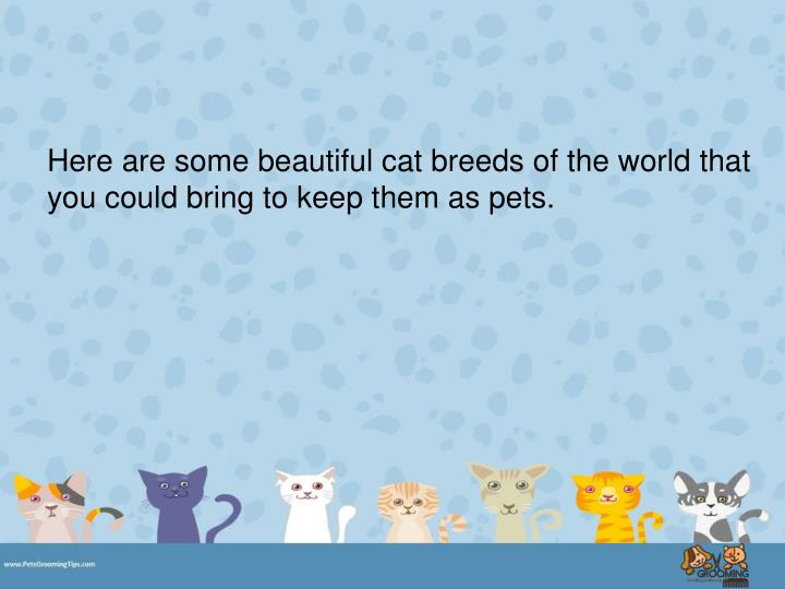 Here are some beautiful cat breeds of the world that you could bring to keep them as pets.