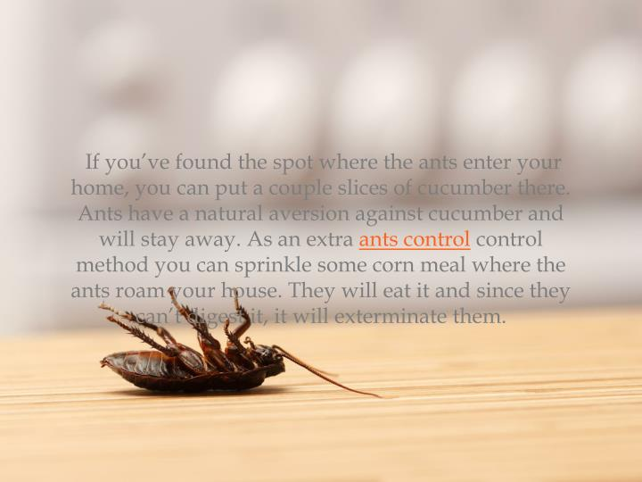 If you've found the spot where the ants enter your home, you can put a couple slices of cucumber there. Ants have a natural aversion against cucumber and will stay away. As an