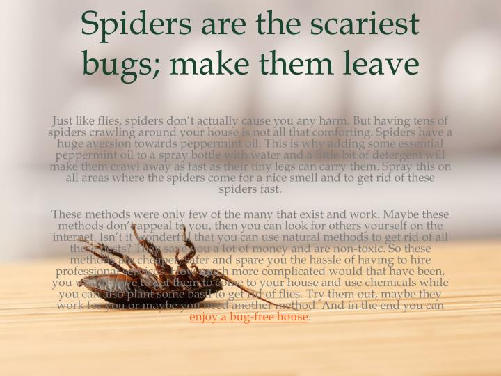 Spiders are the scariest bugs; make them
