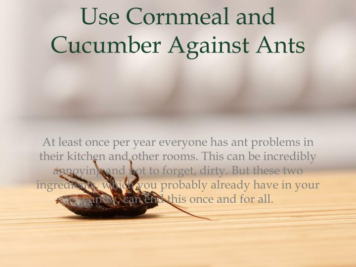 Use cornmeal and cucumber a gainst ants
