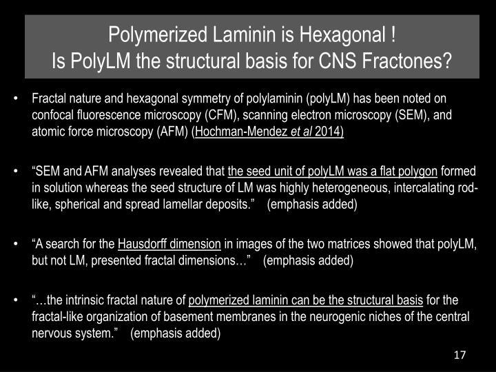 Polymerized Laminin is Hexagonal !