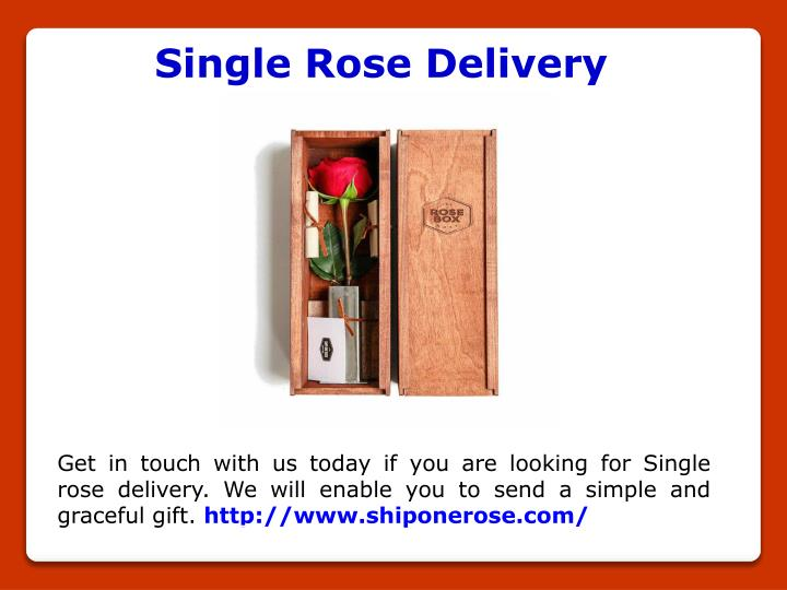 Single Rose Delivery
