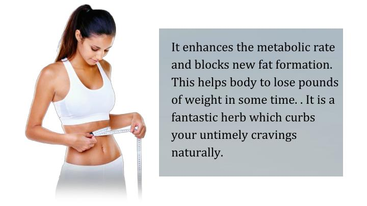 It enhances the metabolic rate and blocks new fat formation. This helps body to lose pounds of weight in some time. . It is a fantastic herb which curbs your untimely cravings naturally.