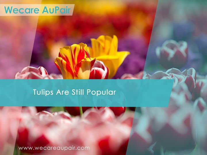 Tulips Are Still Popular