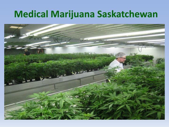 Medical Marijuana Saskatchewan