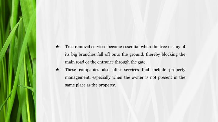 Tree removal services become essential when the tree or any of