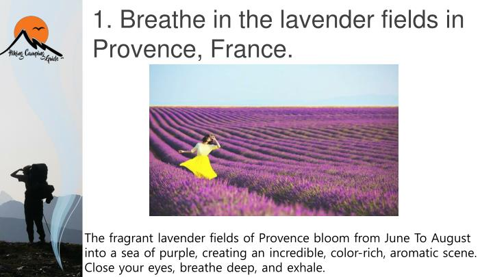 1 breathe in the lavender fields in provence france