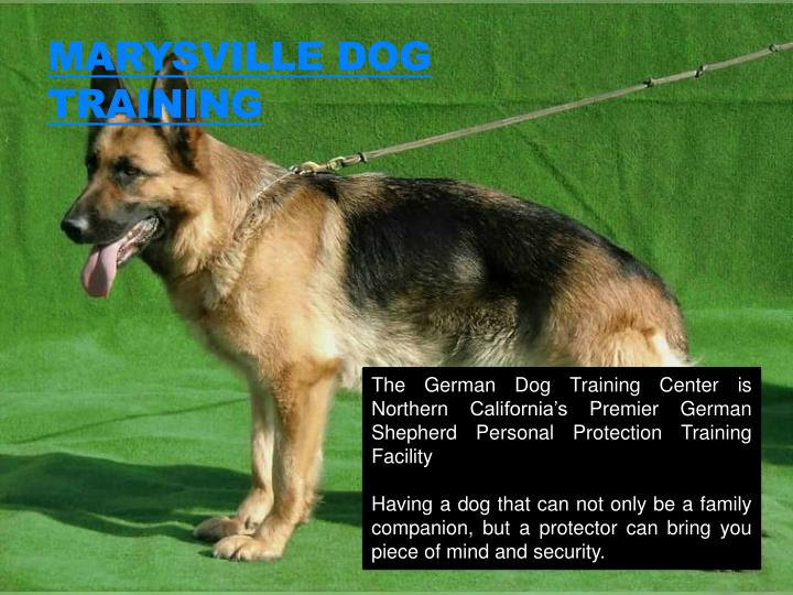 Marysville dog training1