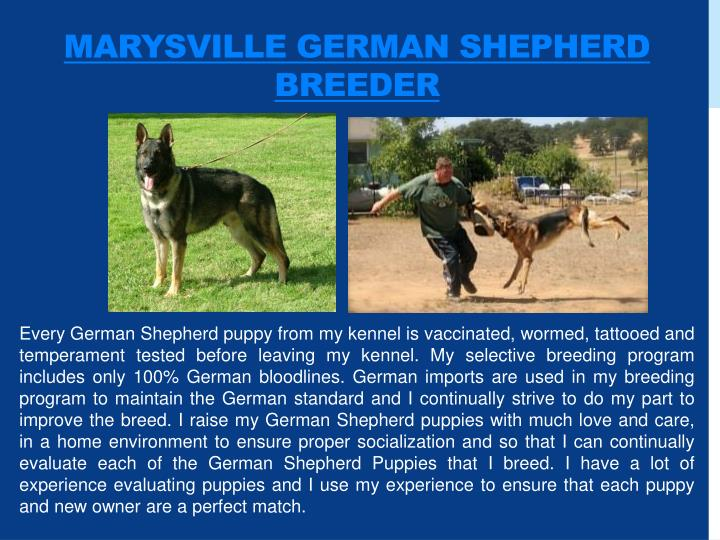 Marysville german shepherd breeder