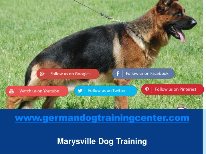 www.germandogtrainingcenter.com