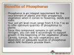 benefits of phosphorus