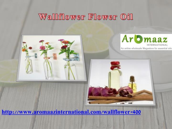 Wallflower Flower Oil