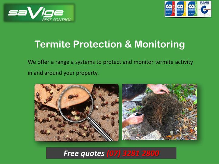 Termite Protection & Monitoring