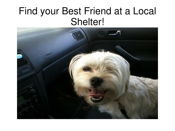 Find your best friend at a local shelter
