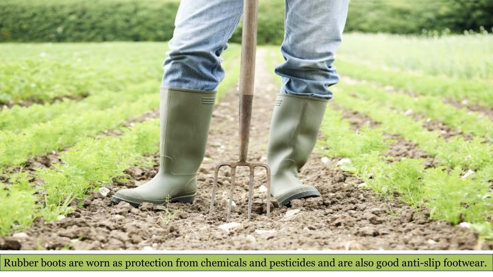 Rubber boots are worn as protection from chemicals and pesticides and are also good anti-slip footwear.