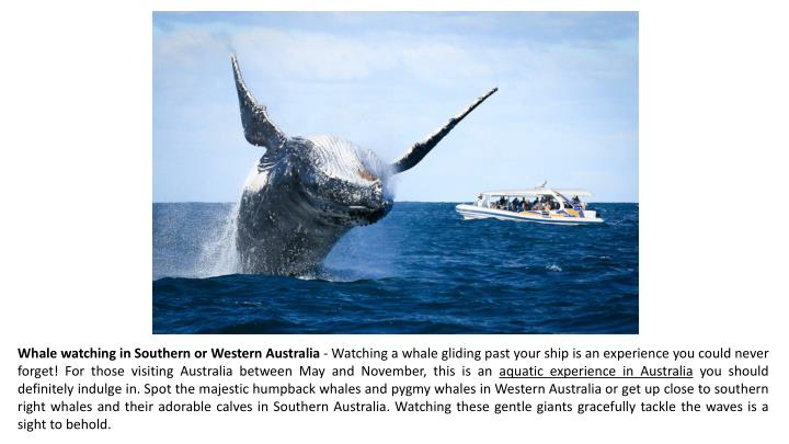 Whale watching in Southern or Western Australia