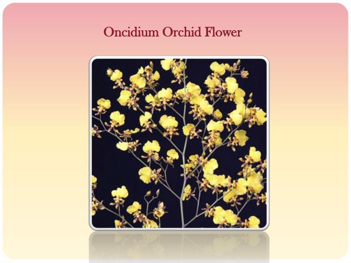 Oncidium Orchid Flower