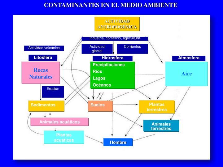 CONTAMINANTES EN EL MEDIO AMBIENTE