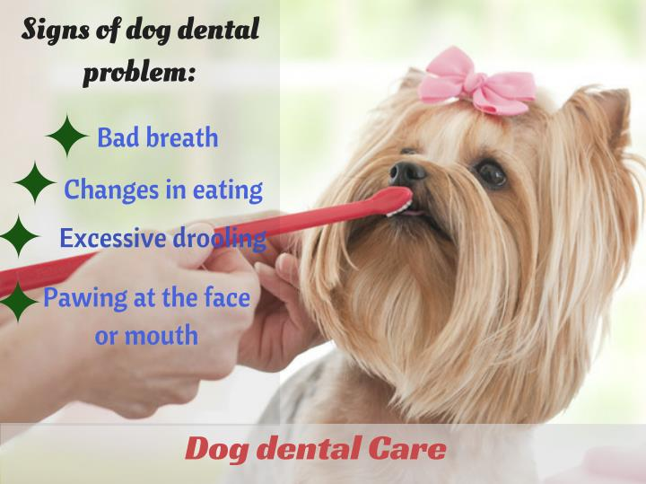 Signs of dog dental