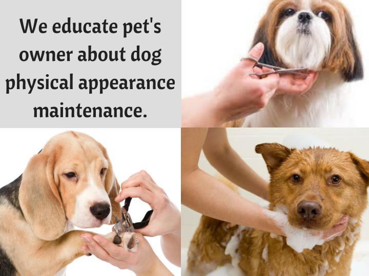 We educate pet's