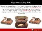 importance of dog beds