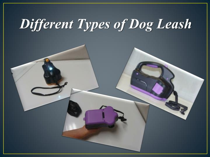 Different Types of Dog Leash