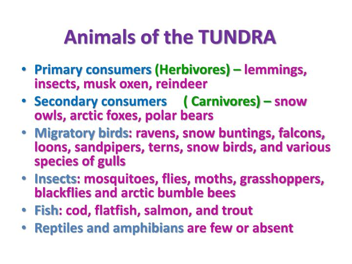 Animals of the TUNDRA