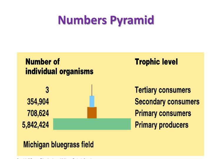 Numbers Pyramid