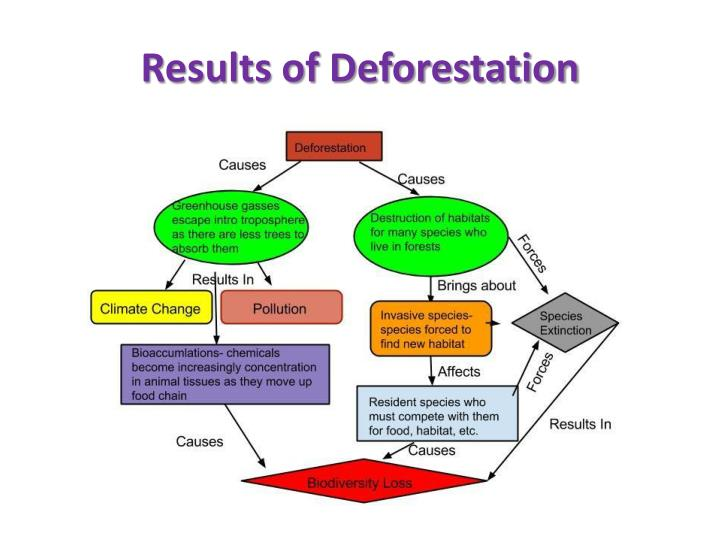 Results of Deforestation