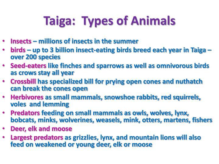 Taiga:  Types of Animals