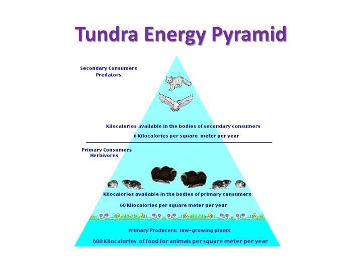Tundra Energy Pyramid