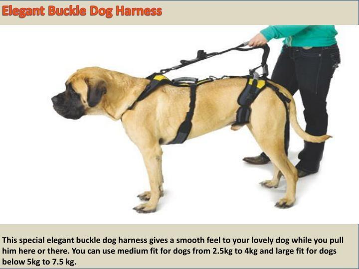 Elegant Buckle Dog Harness