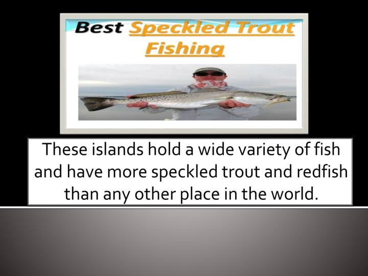 These islands hold a wide variety of fish and have more speckled trout and redfish than any other pl...