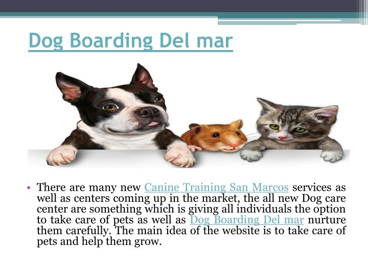 Dog Boarding Del mar
