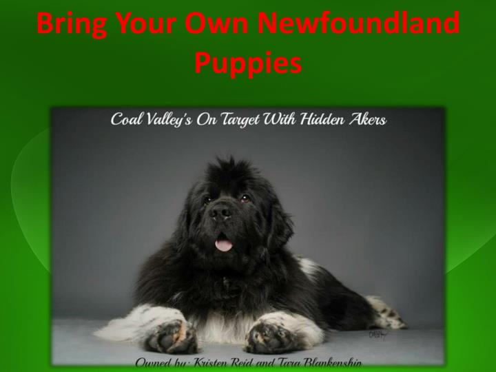 Bring Your Own Newfoundland Puppies