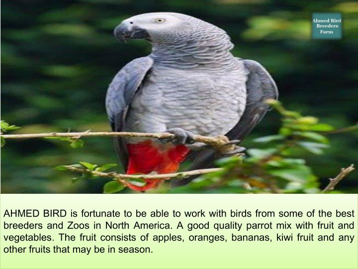 AHMED BIRD is fortunate to be able to work with birds from some of the best breeders and Zoos in North America. A good quality parrot mix with fruit and vegetables. The fruit consists of apples, oranges, bananas, kiwi fruit and any other fruits that may be in season.