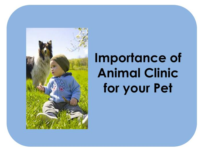 importance of animal clinic for your pet n.