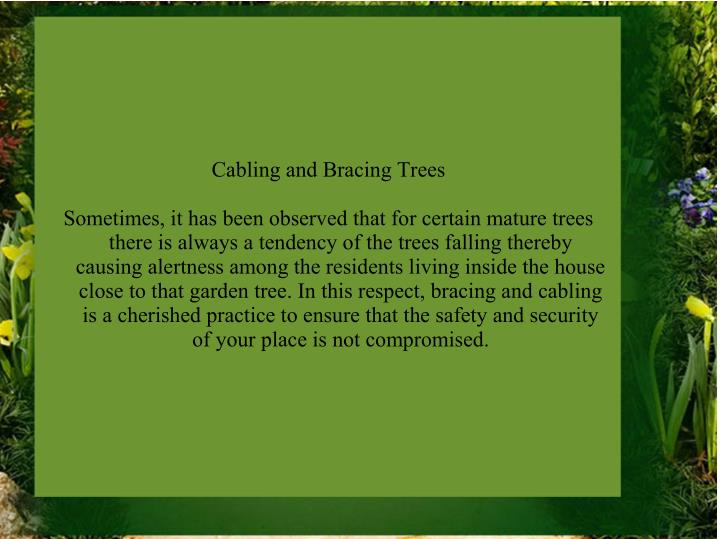 Cabling and Bracing Trees