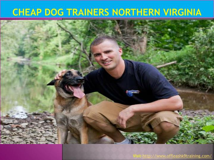 cheap dog trainers northern virginia n.