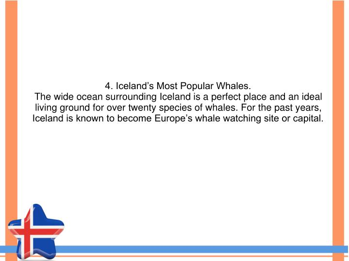 4. Iceland's Most Popular Whales.