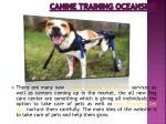 canine training oceanside