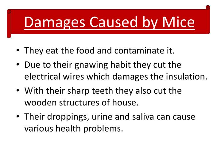 Damages caused by mice