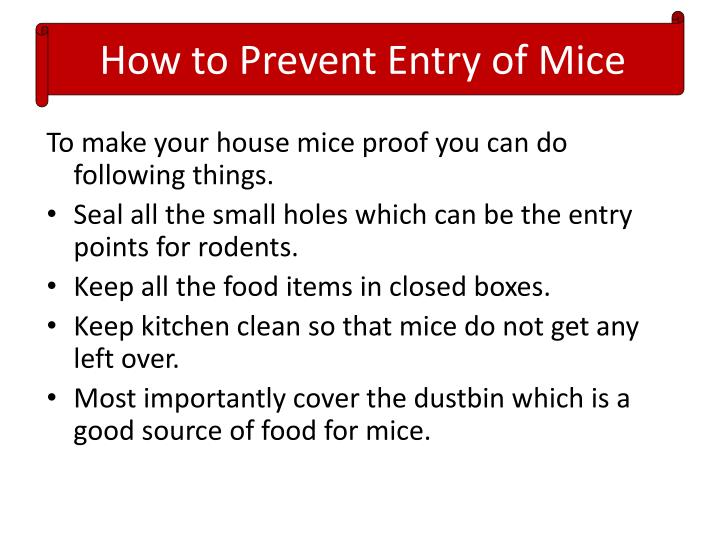 How to Prevent Entry of Mice