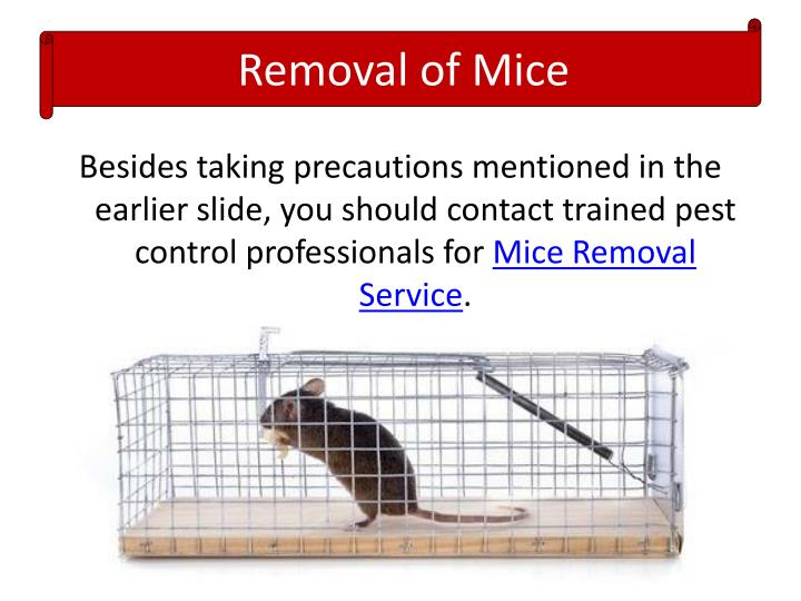Removal of Mice